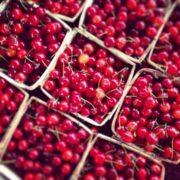 Michigan Tart Cherries - The Lemon Bowl