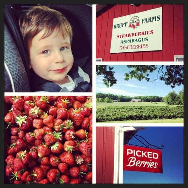 Strawberry Farm - The Lemon Bowl