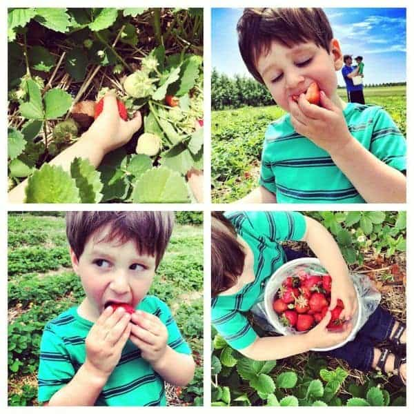 Strawberry Picking - The Lemon Bowl