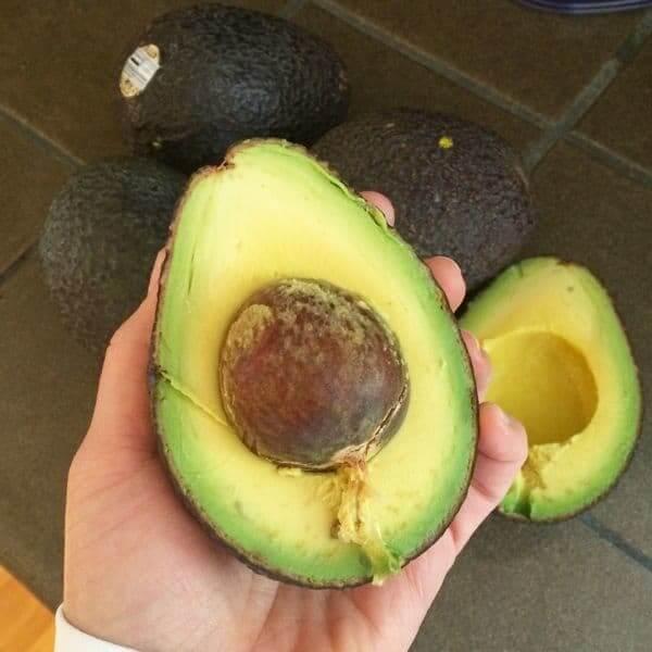 California Avocados - The Lemon Bowl