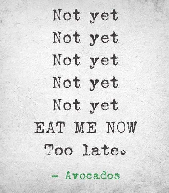 funny-Avocado-eat-now-quote-1