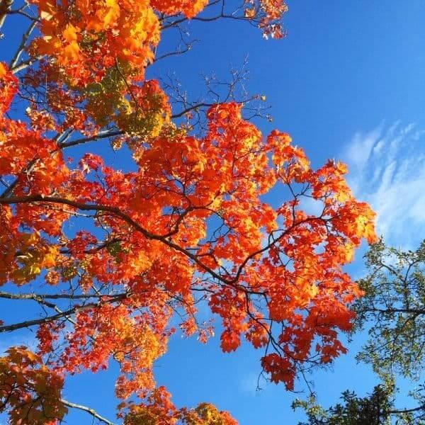 Foliage September 14