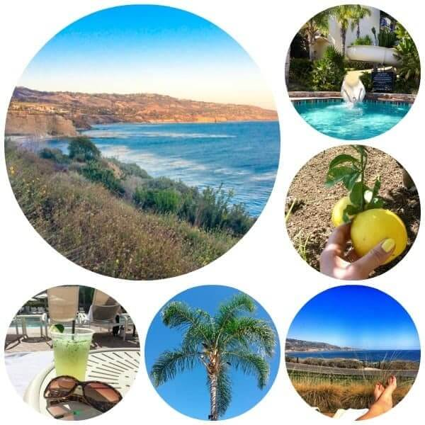 Terranea Landscape - The Lemon Bowl