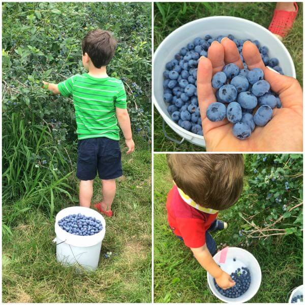 Blueberry Picking - The Lemon Bowl