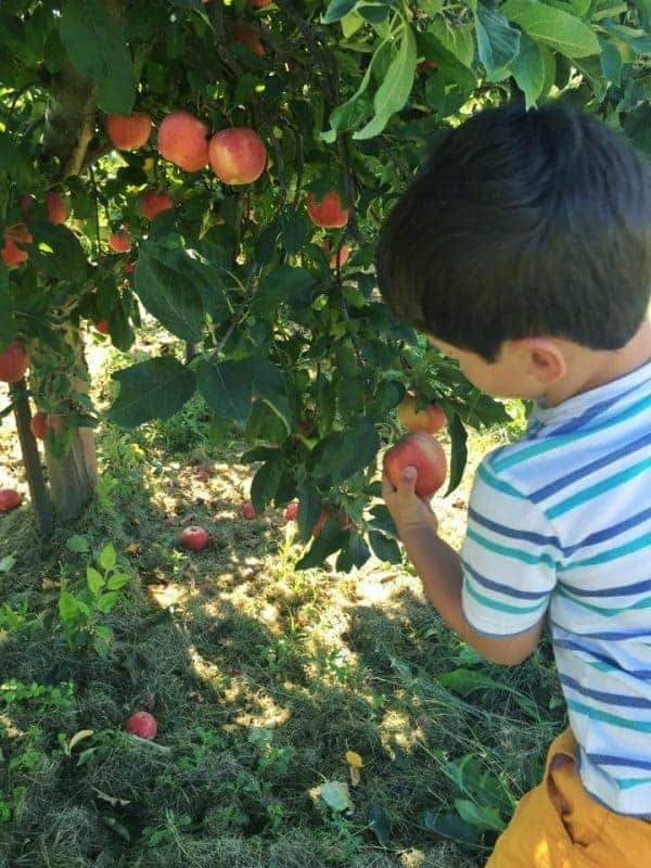asher-apple-picking