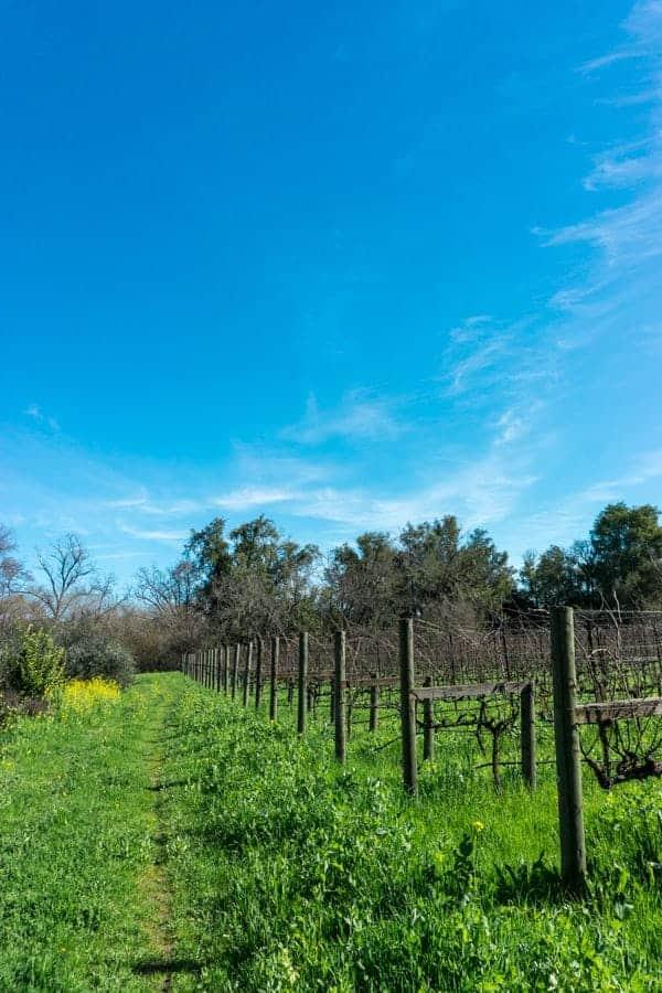 Doug Lipton Farm Vineyard
