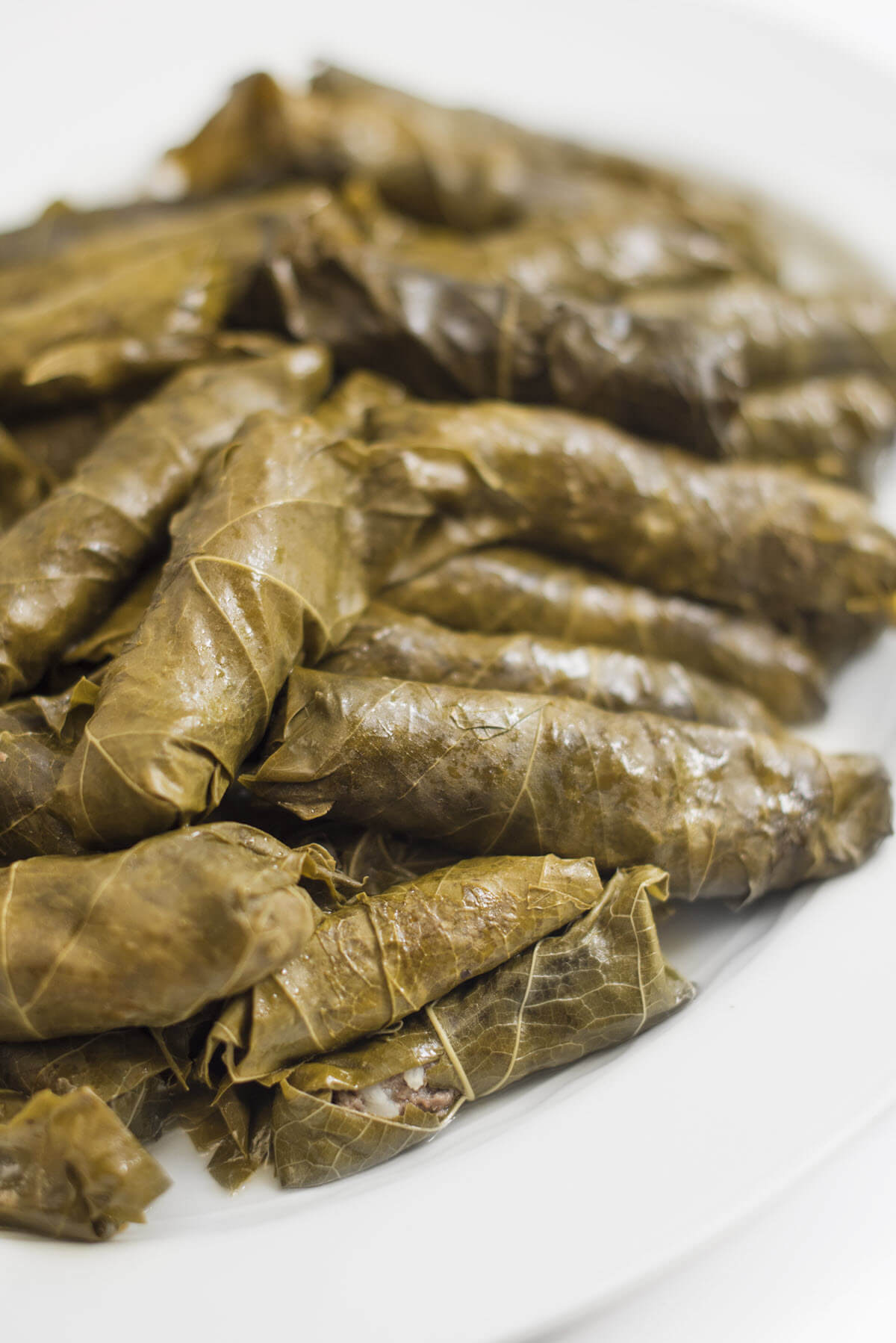 Meat Grape Leaves on a plate